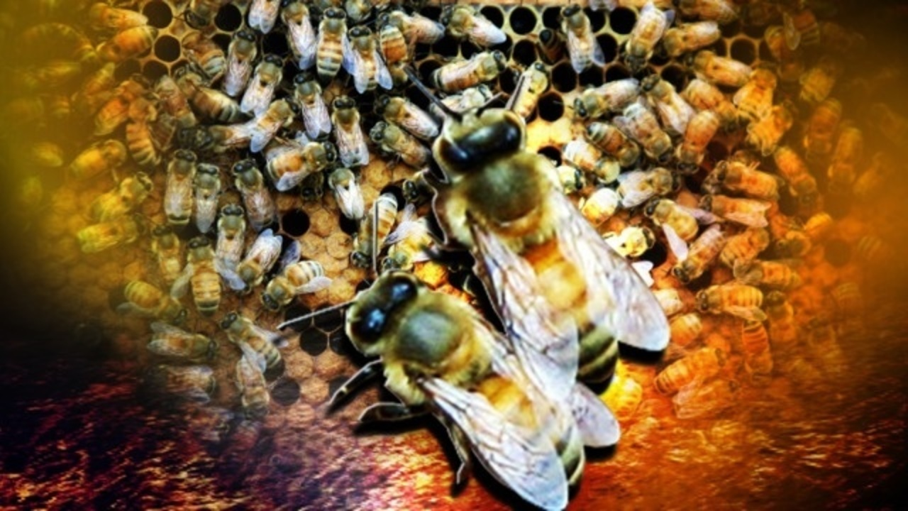 African bees sting