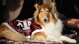 7 Aggie canine mascots buried outside updated Kyle Field