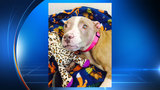 ACS: Dog doused with acid no longer needs surgery