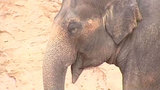 Animal rights group sues SA Zoo over treatment of elephant Lucky