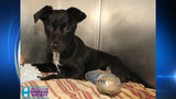 Humane Society nurses injured dogs back to health