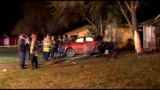 Driver crashes head-on into tree, dies