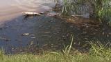 Lightning strike blamed for oil spill in Lytle