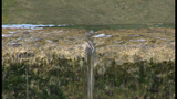 Edwards Aquifer likely to avoid pumping restrictions in 2016