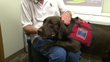 Nonprofit organization rescues, trains dogs to become service animals&hellip&#x3b;