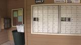 Surveillance cameras catch mailbox thief in action