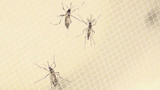 Additional Zika cases found in Cameron County