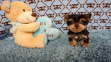 7 puppies stolen from Southeast Side pet store (w/ slideshow)