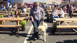 Gino, service dog-in-training, giddyups for rodeo crowds