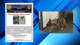 Bexar County Fire Marshal's Office searching for missing K-9