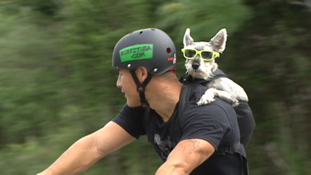 New dog carrier allows injured, older dogs more freedom