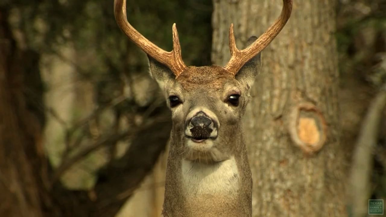 Chronic Wasting Disease Detected In Medina County
