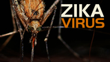 First 2017 Texas case of local Zika transmission reported