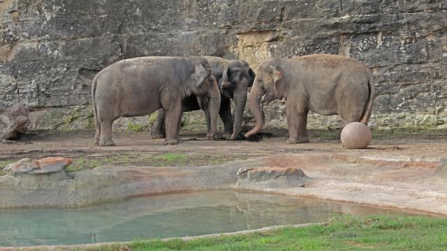 Lucky Karen Nicole San Antonio Zoo elephants