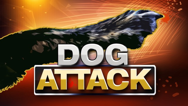 SAFD: Firefighter, paramedic hospitalized after dog attack