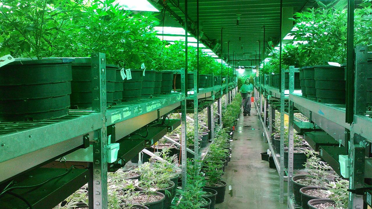 San Antonio Area Doctor Plans To Open Medical Marijuana