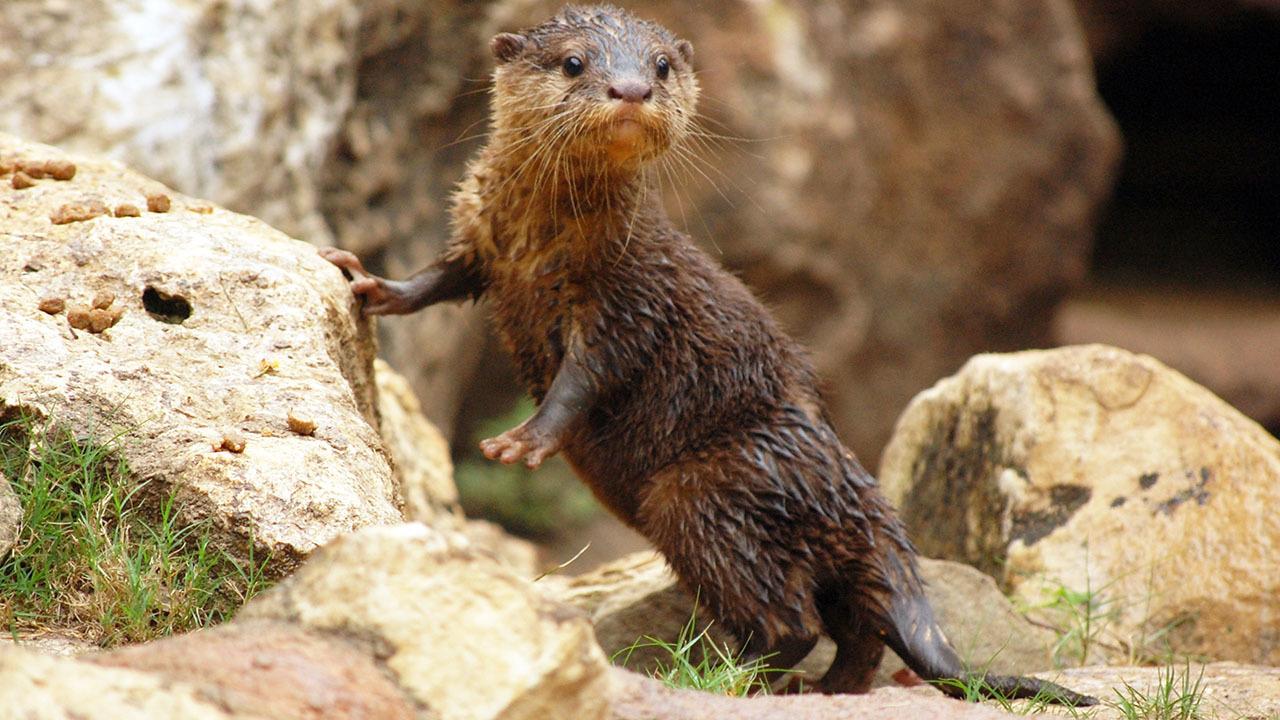 Love Animals San Antonio Zoo Is Hiring For Upcoming Peak