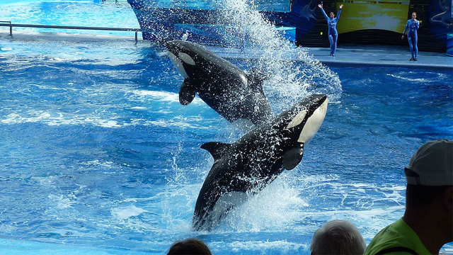 SeaWorld offering free admission for veterans this summer