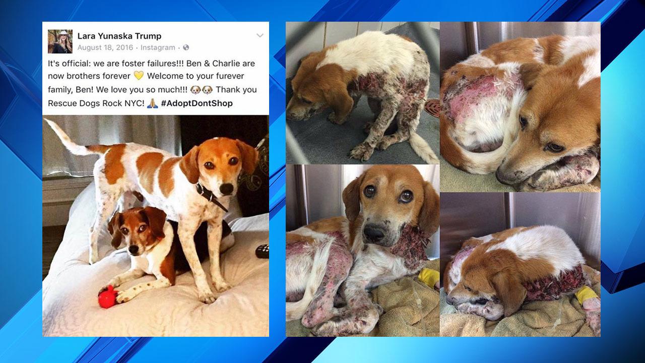 Trump Family Adopts Stray Dog From San Antonio