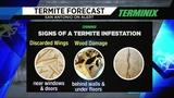 Adam's Termite Forecast