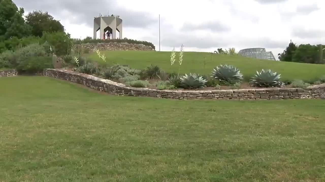 Botanical Garden Vandals On Joyride Trample Bluebonnets