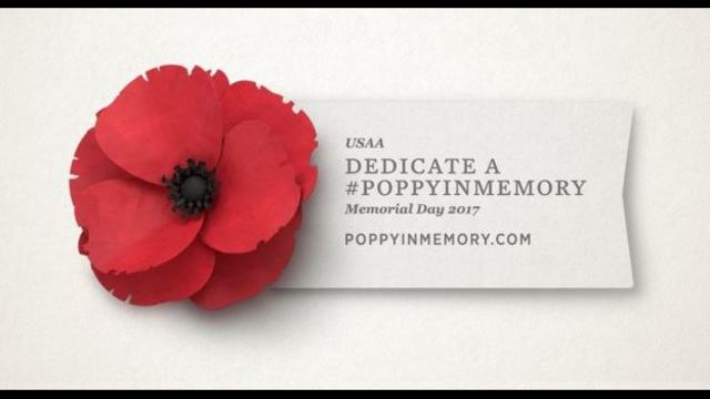 poppy flower is important symbol to honor military in may, Natural flower