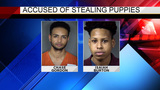2 men charged with theft after stealing puppies from seller, police say