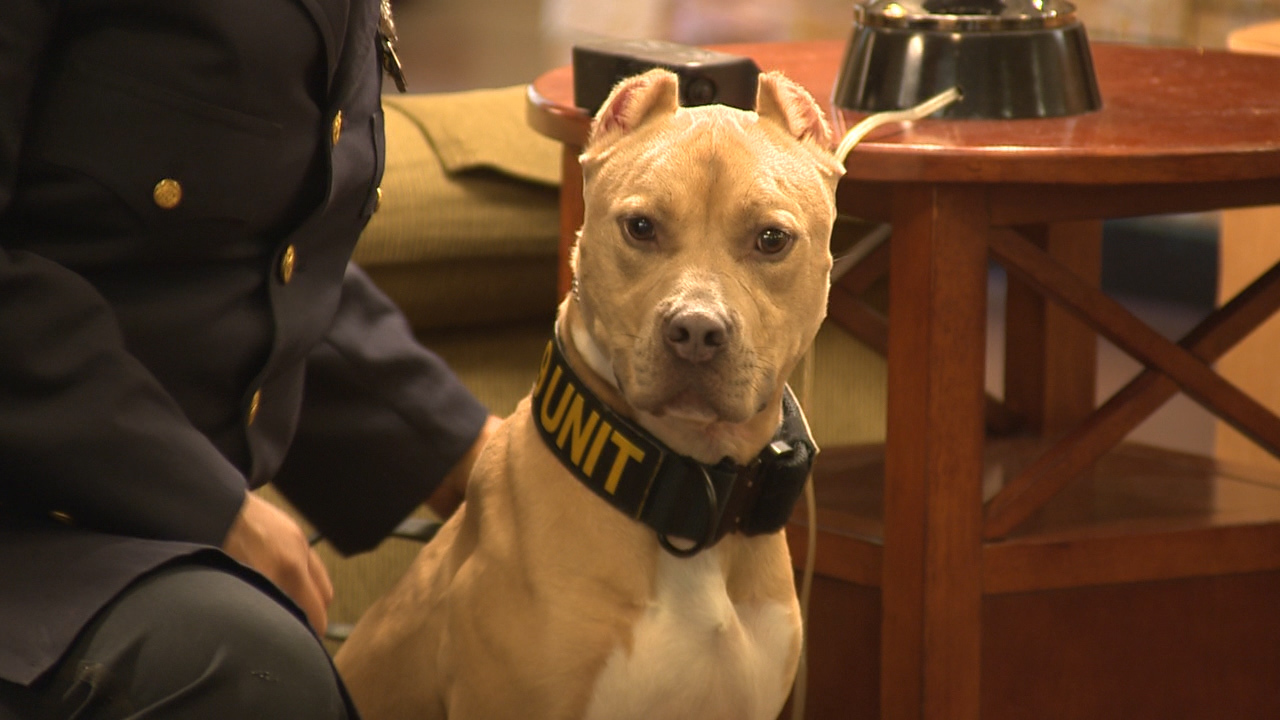 6 Pit Bulls Graduate From Narcotics Training To Become K 9s