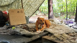 WJXT: Homeless man found caring for 'fur family' in woods