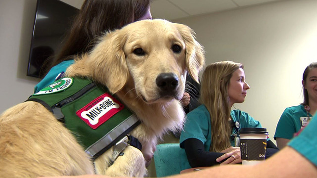 Methodist Healthcare system sending therapy dogs to assist in El Paso…
