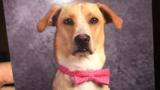 School therapy dog gets own yearbook photo, becomes social media sensation
