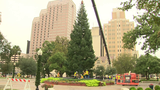 LIVE: City Christmas tree arrives at Travis Park