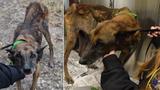 Malnourished, tattooed dog found in December dies in ACS custody