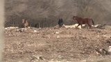 ACS seizes several horses, donkeys on Northeast Side