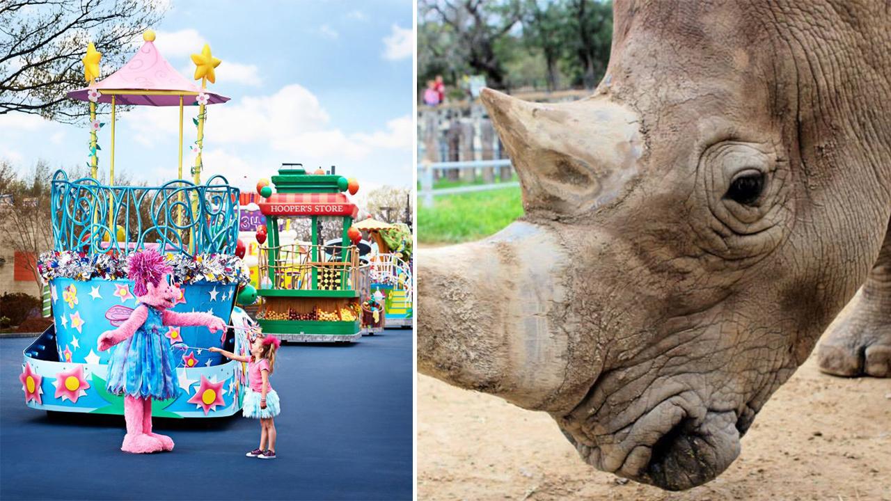 Houston Zoo Free Kids