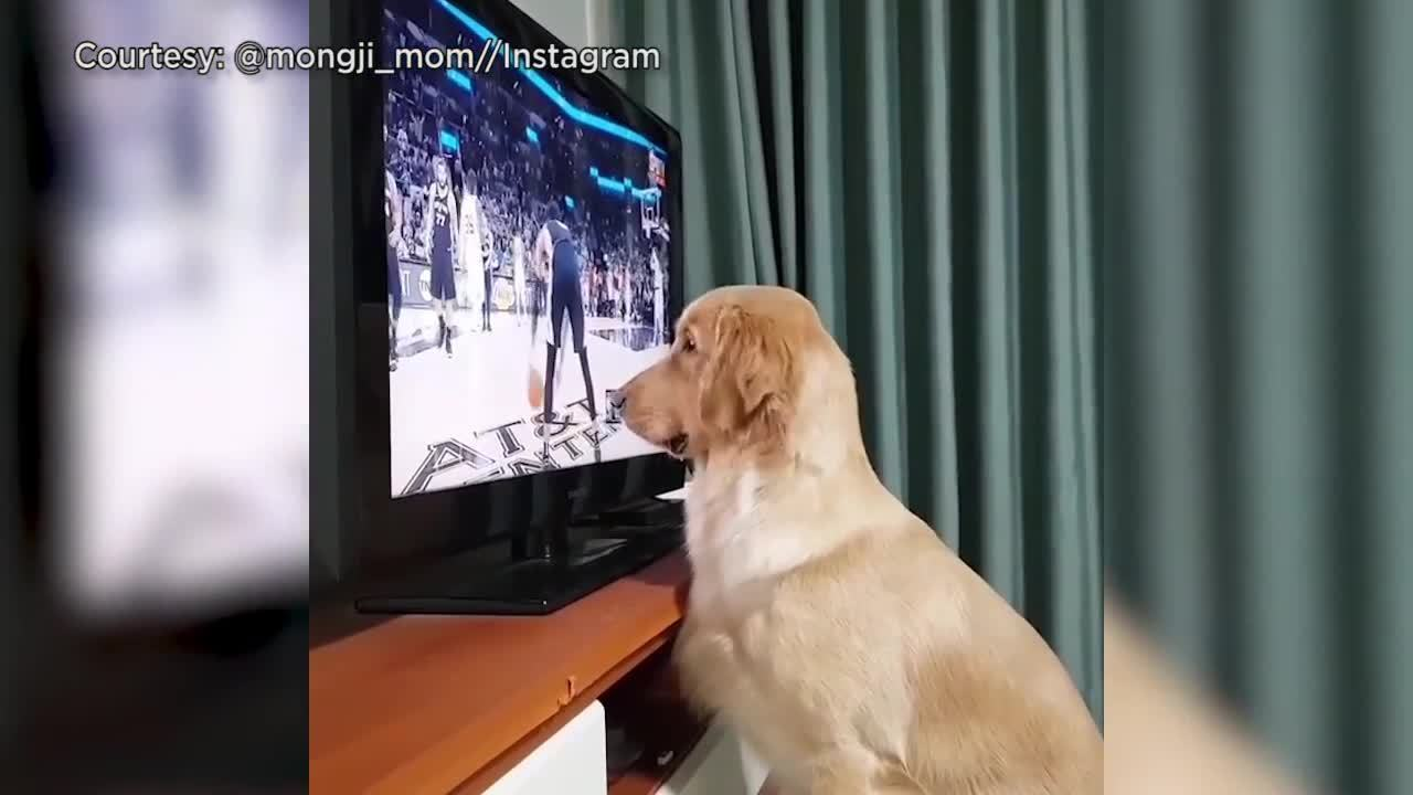 Video Furry Spurs Fan Anxiously Awaits Final Buzzer In Win