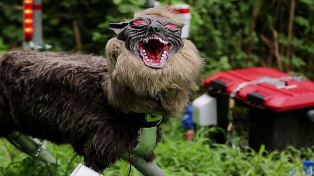 Super Scary Animatronic Wolves Being Used In Japan To