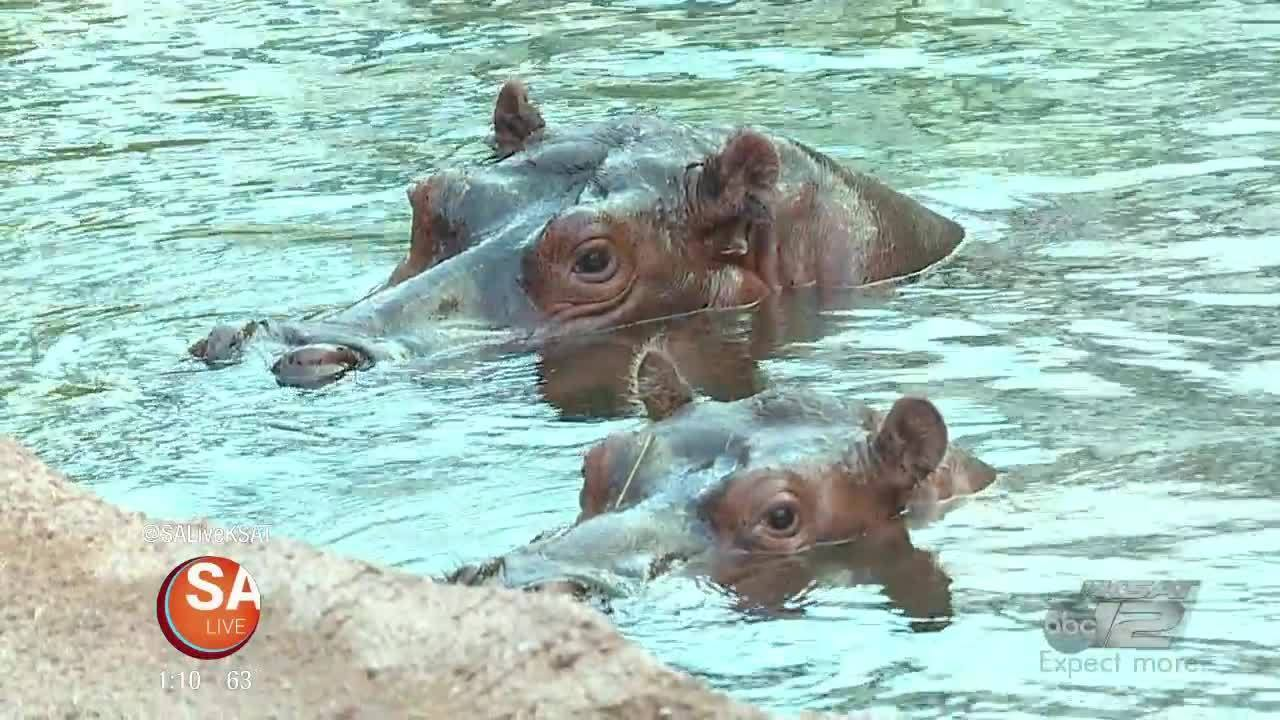 WILD Wednesdays: A Love letter to Fiona..The HIPPO