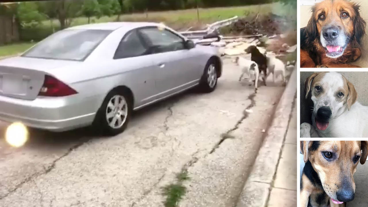 Woman in dog-dumping video turns herself in after video of