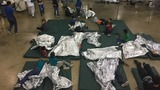 Senate study faults government care of migrant children