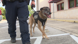 Converse PD gets bulletproof vests for police dogs