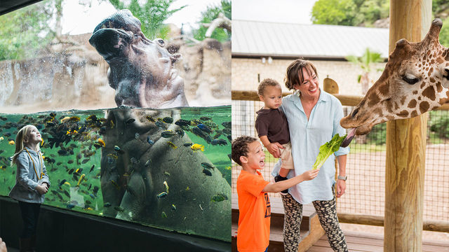 Get half off admission to San Antonio Zoo Monday