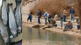 Thousands of rainbow trout to be stocked in San Antonio lakes