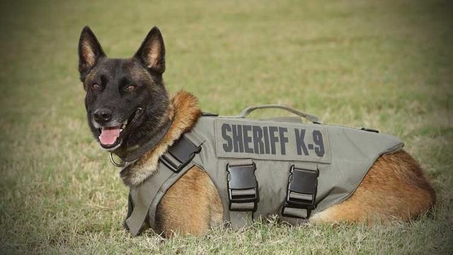 K-9 Chucky to get permanent memorial downtown