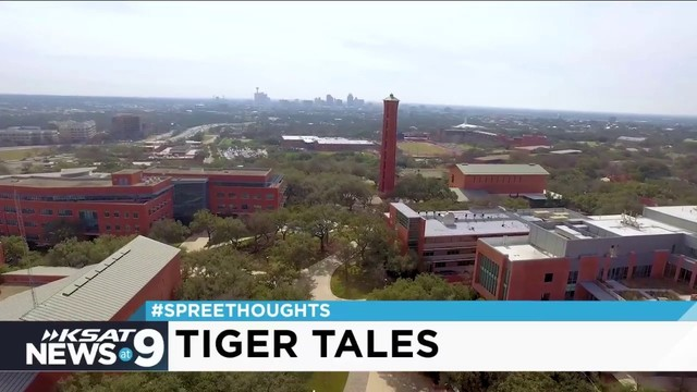 'Spree Thoughts': Tiger Tales
