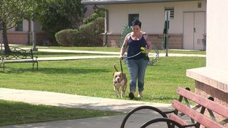 Dog day trip has positive impact on retired veteran