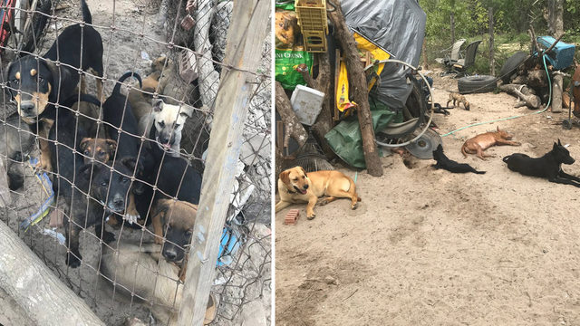 Owner faces animal cruelty charges after BCSO rescues 37 dogs
