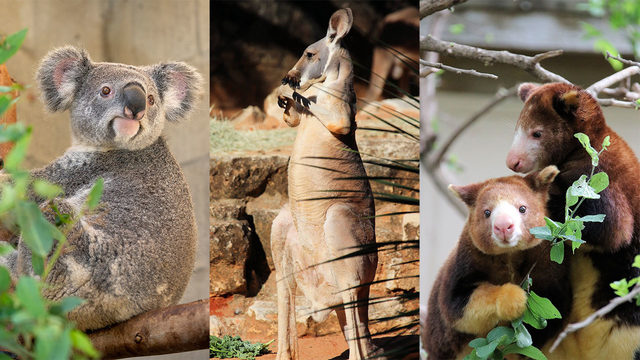 Get ready to spend a little koala-ty time at San Antonio Zoo