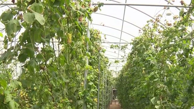 Despite Texas heat, local entrepreneur found way to commercially grow hops