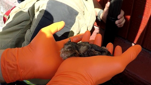 WATCH: Leon Valley firefighters rescue kittens trapped in pipe using shop vacuum